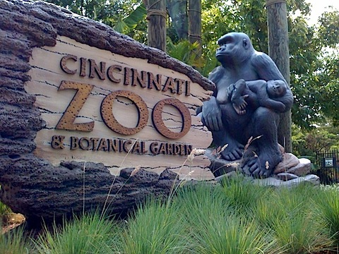 cincy-zoo